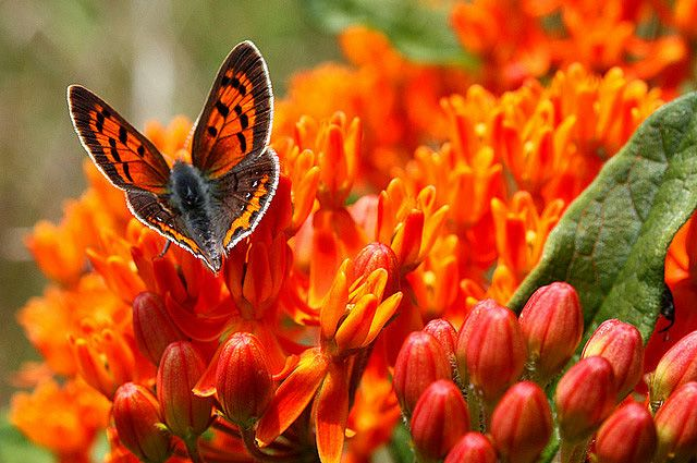 beautiful butterflies pictures | 35 Most Beautiful Butterfly Pictures | Incredible Snaps