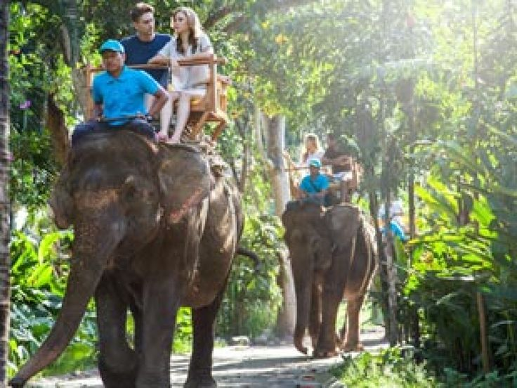 Elephant Ride Bali Zoo safari will take you get closer to the top one of the biggest land animal in the earth while enjoy of the tropics and exotic plants. Feel a thrilling experience opportunity to personally hand feed the elephant as well.PACKAGE INCLUDES : Bali Zoo admission, 15 minutes elephant ride, Jungle Splash, animal encounters, exotic bird show, insurance. - - YukmariGO.com