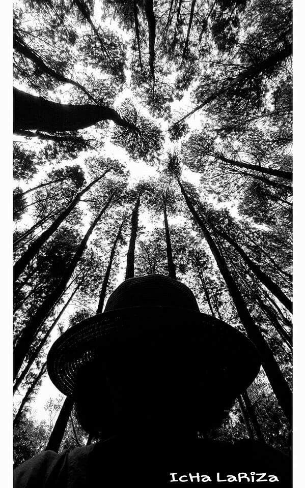 Hutan Pinus Imogiri, Yogyakarta - Indonesia