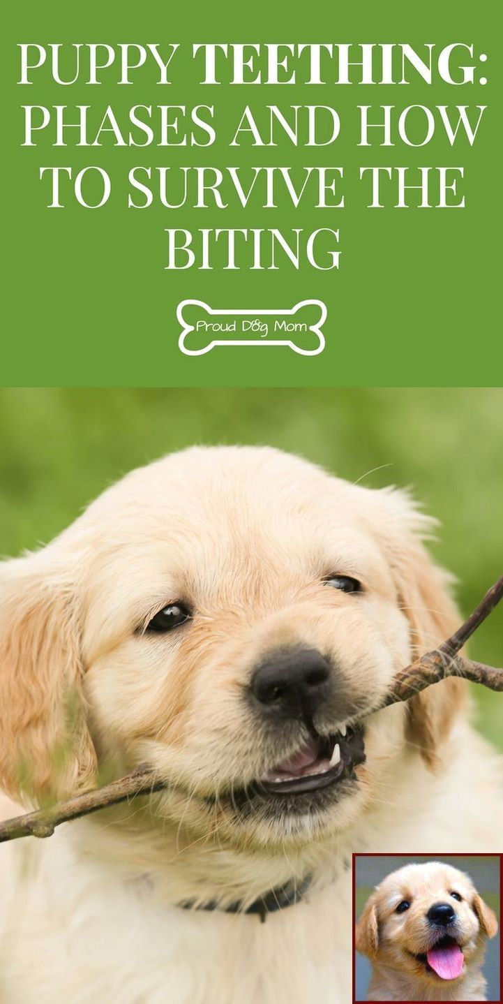 Potty Dog Training House Training A Puppy At Night And Dog Training Classes Online Puppy Teething Puppy Training Biting Dog Care