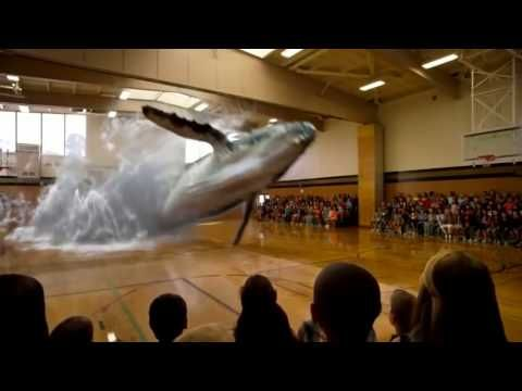 7D Hologram Technology Whale Fish Video - 7D Hologram Technology Show in Dubai - YouTube