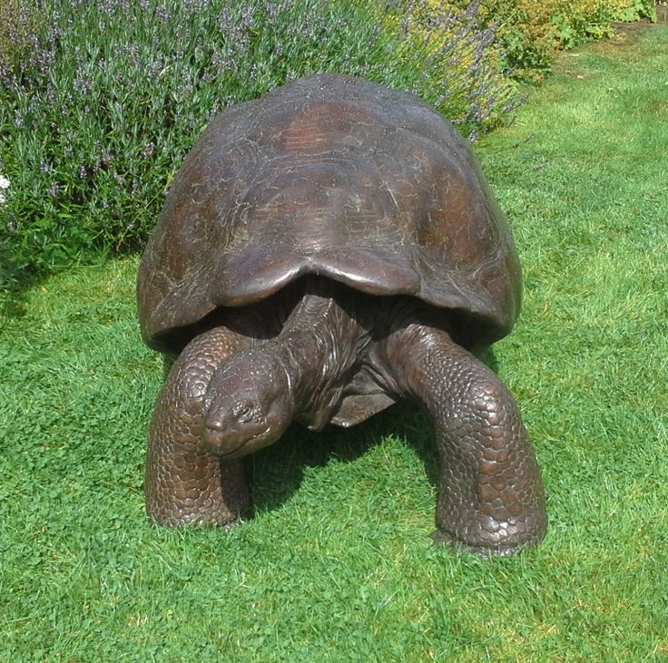 Life size Giant Galapagos Tortoise II. Limited edition bronze sculpture, one of a pair. 85cm x 135cm x 95cm