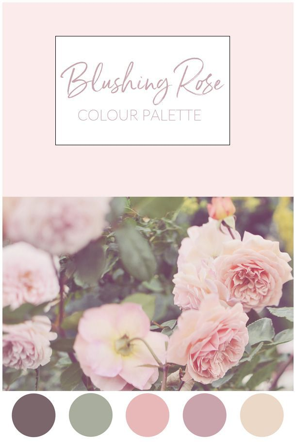 Blush Pink Roses Stock Photo | Color palette pink, Green colour ...
