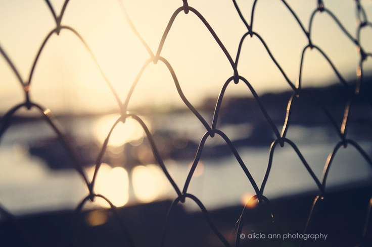 Lovely golden bokeh.  Simple image that really works