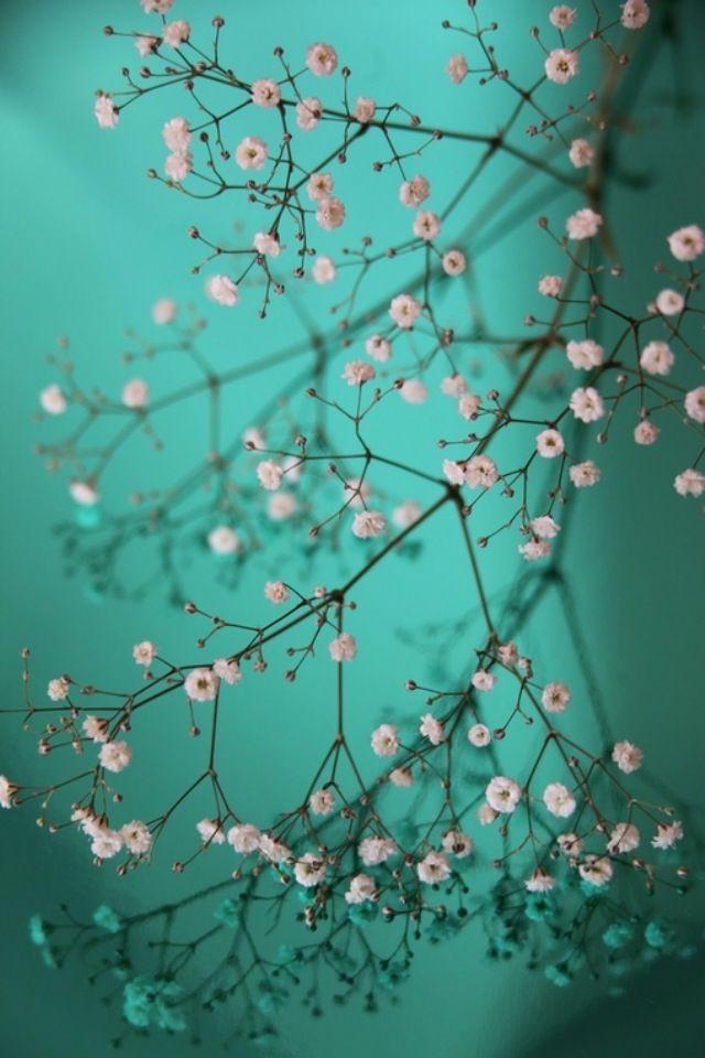 Pretty little Flowers iPhone Wallpaper Download   iPhone Wallpapers, iPad wallpapers One-stop Download