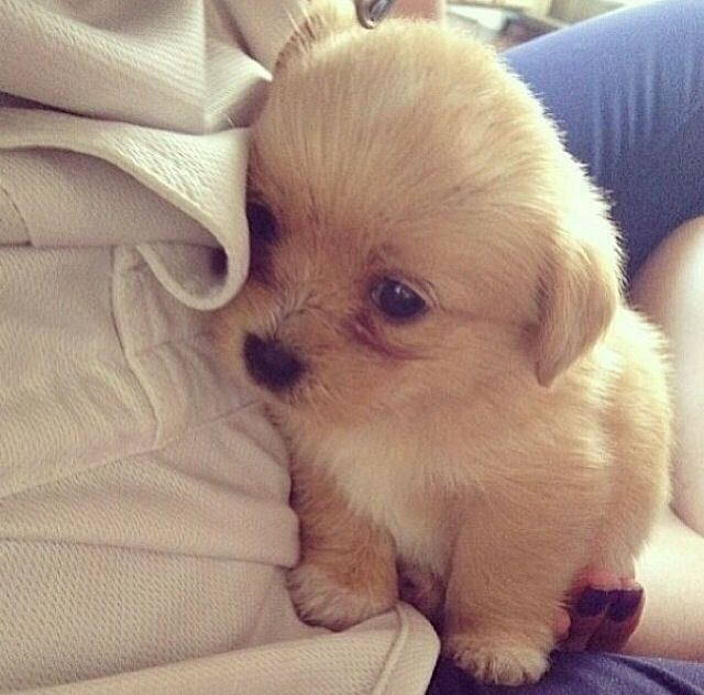 adorable pup.