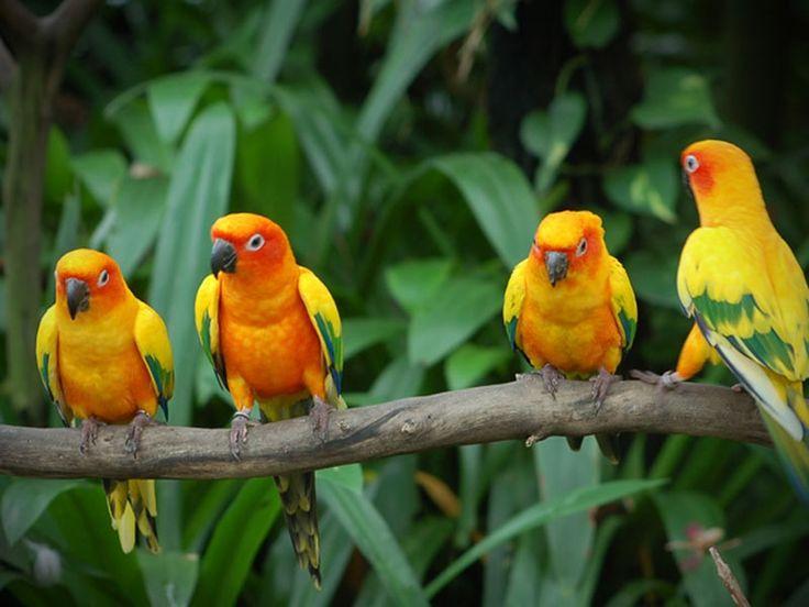 Anerdam Wildlife Sanctuary - in maharashtra, India