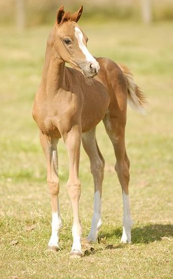 246 best images about Horse Color Galore: Foal Coats on ...