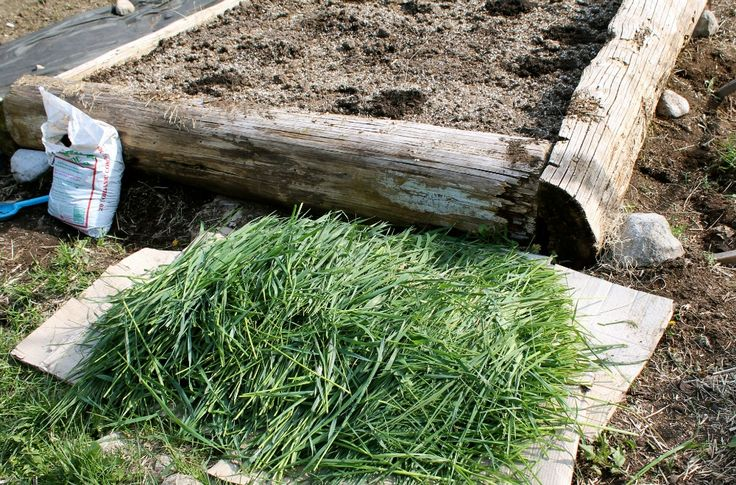Grass Clippings & Weeds as Garden Mulch Family Food