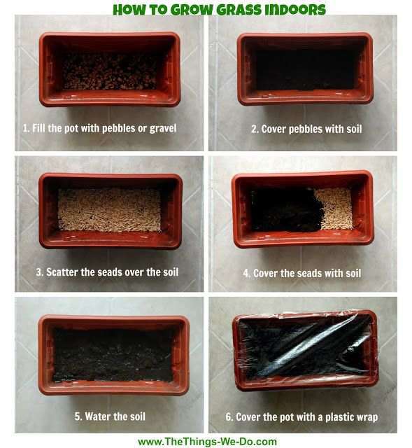 DIY Cat Grass | How to grow grass indoors  If you are a happy owner of a cat, you know that all felines love eating grass. By eating grass they make their stomach and digestive tract work better. If your fluffy friend is not allowed outdoors, it often gets really interested in the house plants. To save your plants from being eaten you can always grow a personal pot of grass for your cat.