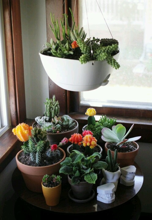 Lotus Gardens Outdoor Living Center loves these little guys! So decorative and a great way to spruce up a small space!