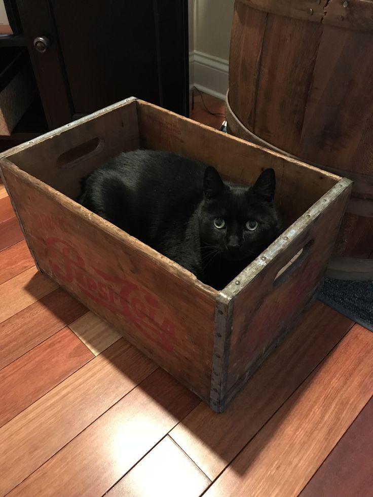 Cat in a wood box. Love it.