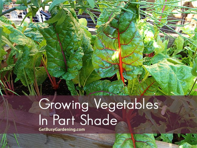 17 Best Images About Home Depot Garden Club Ideas On