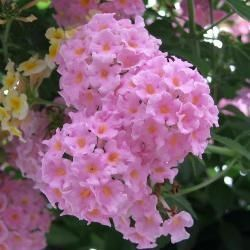 Top 10 Most Beautiful Flowers that Grow Well in Poor Soil