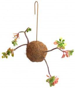 fin.plante