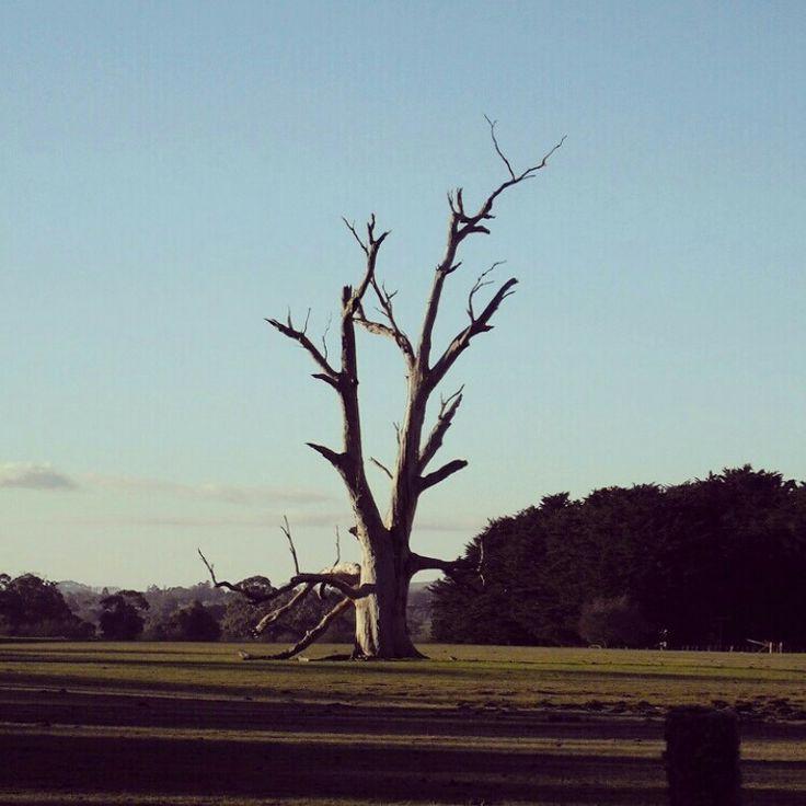 17th: 'Tree'