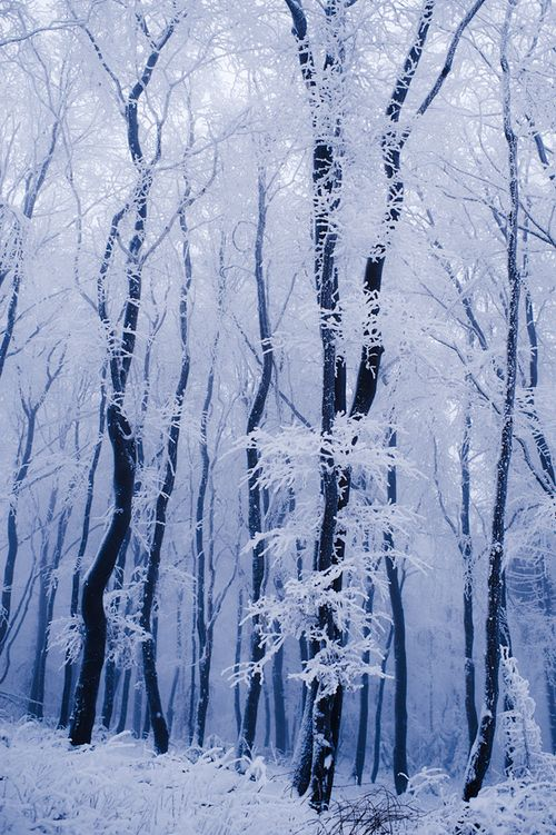 Love the winter...it's not dismal or depressing at all to me. The earth is resting for the coming of new life.