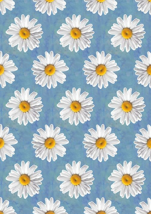 Daisy Blues - Daisy Pattern on Cornflower Blue