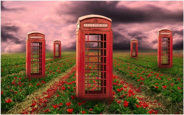 Telephone Booth In Red Flowers Field Wallpaper   telephone booth in red flowers field wallpaper 1080p, telephone booth in red flowers field wallpaper desktop, telephone booth in red flowers field wallpaper hd, telephone booth in red flowers field wallpaper iphone