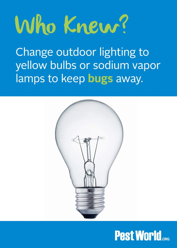 To help keep bugs away, change outdoor lighting to yellow bulbs or sodium vapor lamps. Click to identify bugs or other pests spotted in or around your home.