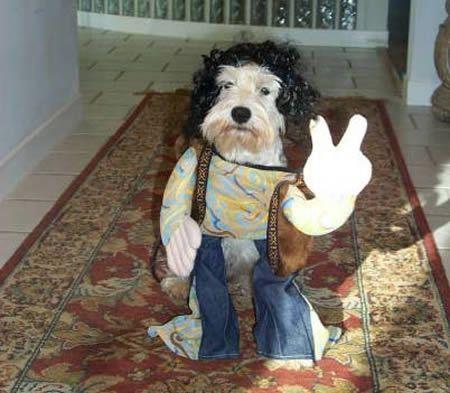 Best 25+ Funny dog costumes ideas on Pinterest | Halloween ...