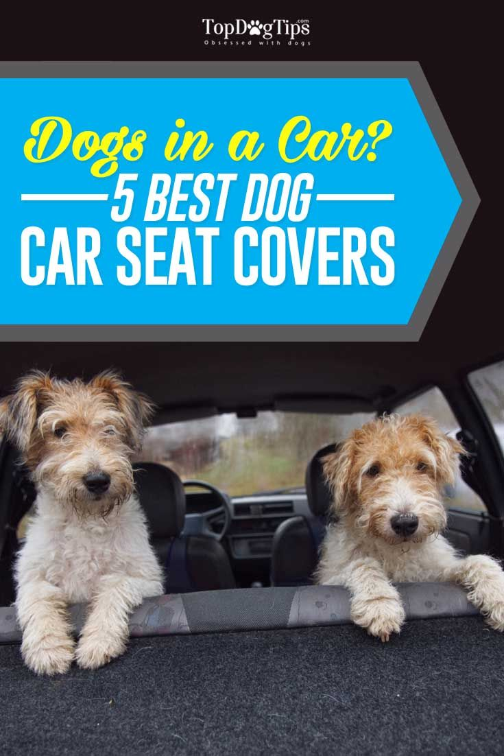Top 5 Best Car Seat Covers for Dogs in 2016 (These Are Easy to Clean). Investing in the best car seat covers for dogs means you can save money and time on cleaning your car's interior after traveling with dogs. #dogs #cars #seats #seatcover #pets #animals #canines #travel