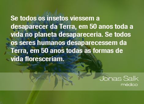 Frases do Meio Ambiente www.oeco.org.br