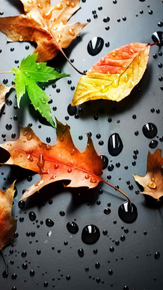 Autumn Falling Leaves Live Wallpaper ☺iphone Ios 7 Wallpaper Tumblr For Ipad Iphone Wallpaper
