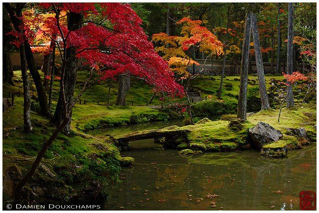 https://flic.kr/p/Kzar1f   Autumn colors in Saiho-ji temple, Kyoto   Also known…