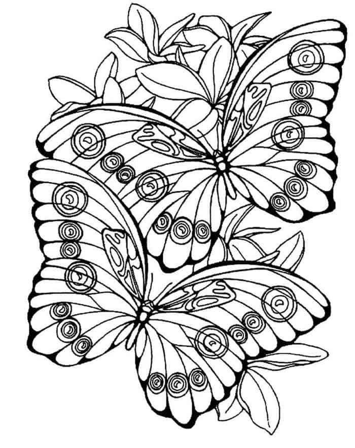 Butterfly Coloring Pages Hard Fei Raskraska Detskie Raskraski Raskraski