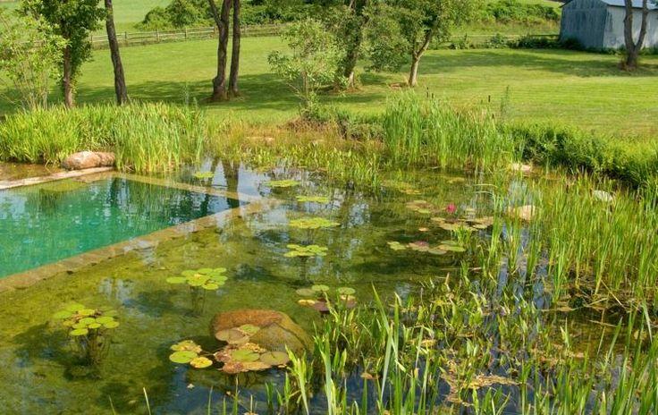 Der Gartenteich anstelle eines Pools ist umweltfreundlich