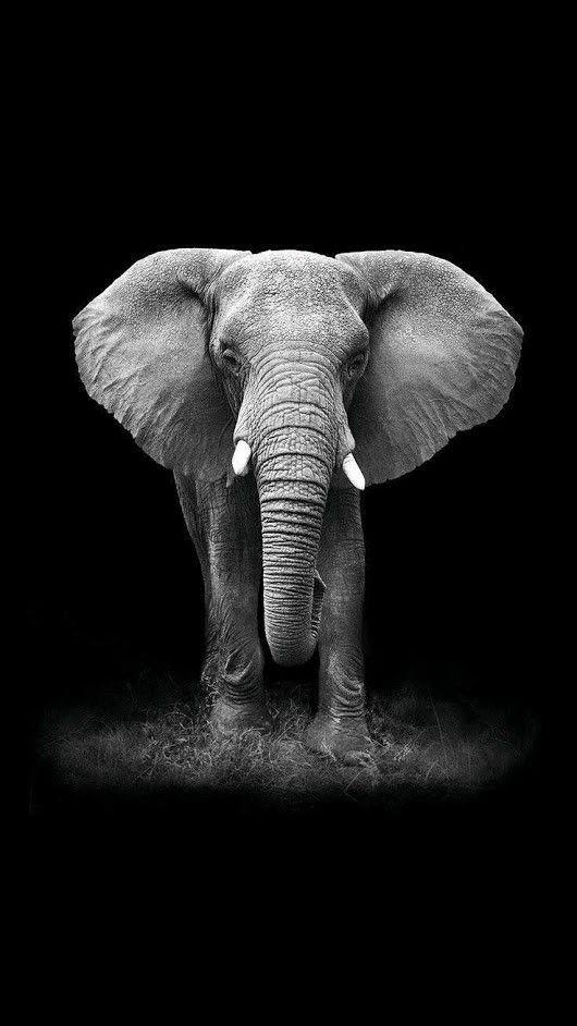 Pin Von Sunshine Auf B W Animals Elefanten Fotografie