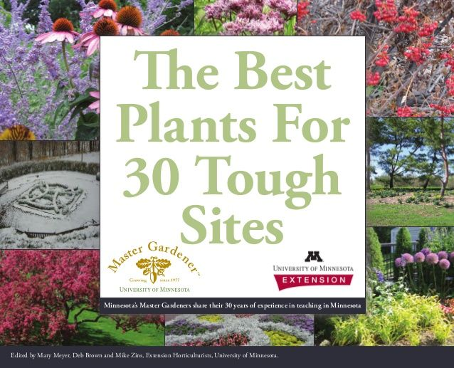 11 best images about septic mound landscaping ideas on pinterest