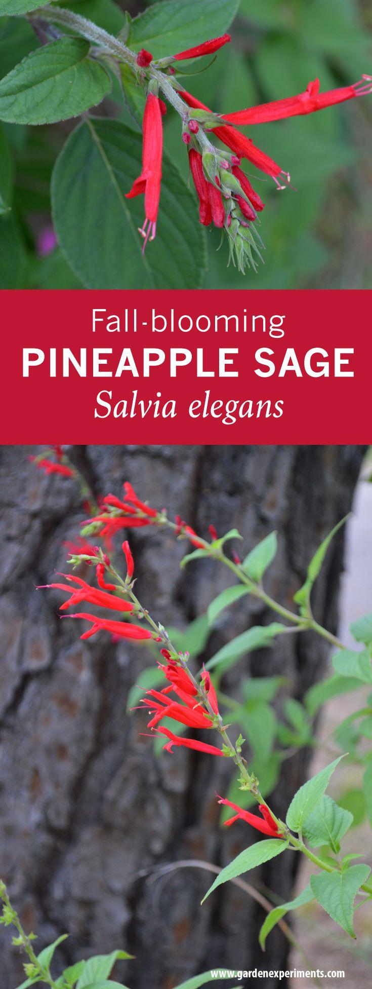 56 best Native Plants images on Pinterest   Native plants ...