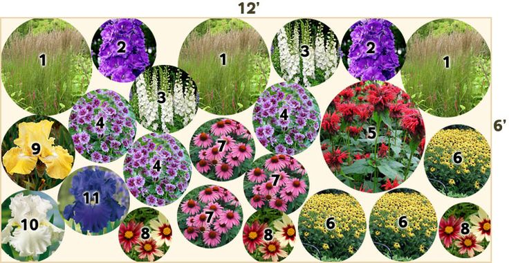 Deer Resistant Garden plan 1 Feather Reed Grass Karl Foerester (Calamagrostis acutiflora) - 3 2  Larkspur Pagan Purples (Delphinium elatum) - 2  3 Larkspur Double Innocence (Delphinium elatum) - 2  4  Mallow Zebrina (Malva sylvestris) - 3  5  Bee Balm Jacob Kline (Monarda) - 1  6  Black Eyed Susan Indian Summer - 3  7  Coneflower Magnus  - 3  8 Tickseed Red Shift (Coreopsis) - 3  9  Bearded Iris Again and Again  - 1 10 Bearded Iris Immortality  -1  11 Bearded Iris Blue Suede Shoes  - 1
