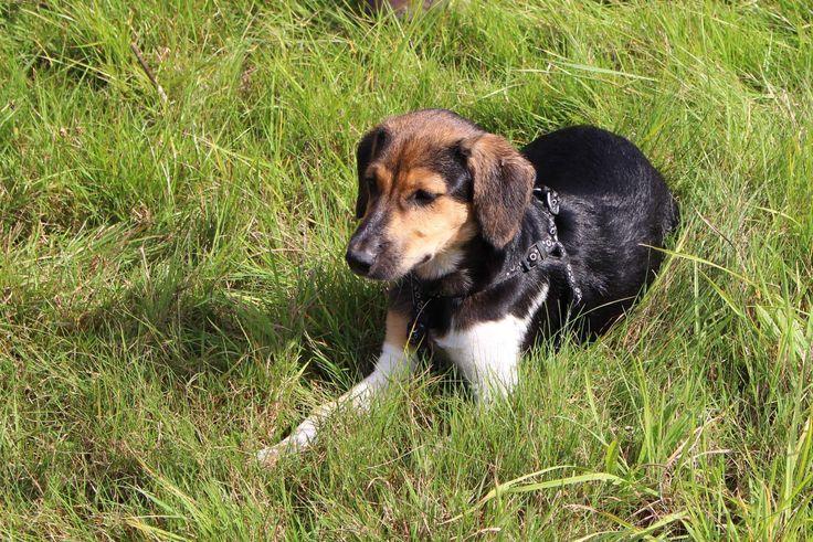 Toto je náš český strakatý pes.-This is our czech spotted dog.