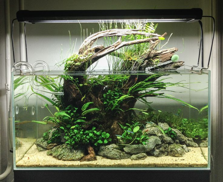 My smaller tank (54l), after some cleanup, 3.5 months old. Maybe it is just time to make a proper photo, for our memories :)