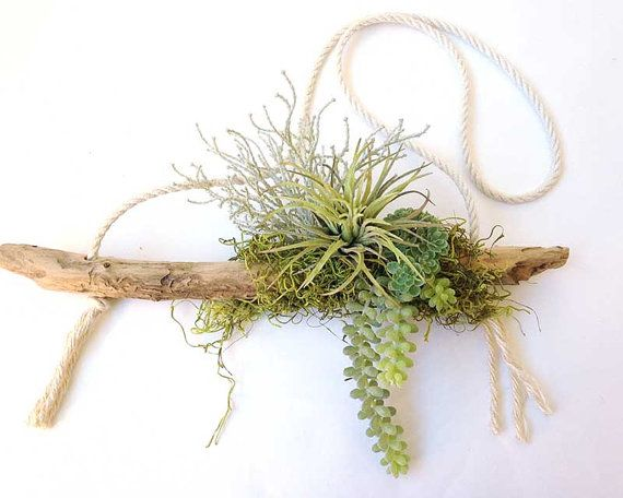 This groovy bohemian decor hanging air plant shares driftwood with tiny succulents and a bed of moss. Comes assembled, you hang where you like. Note