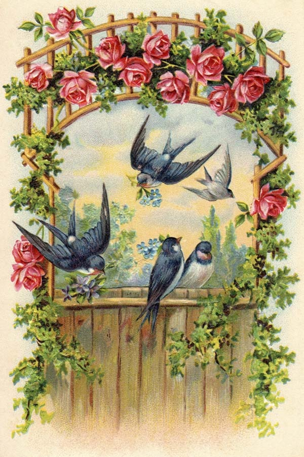 Swallows and Climbing Roses