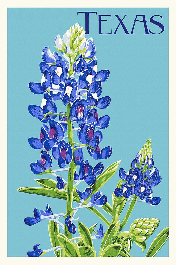 Texas - Bluebonnet - Letterpress (Art Prints available in multiple sizes)