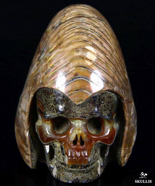 Ammonite Fossil Carved Crystal Skull