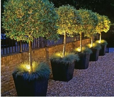 Light Tree's in Planters - perfect for beside the drive way