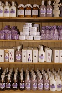 The lavender museum - The boutique