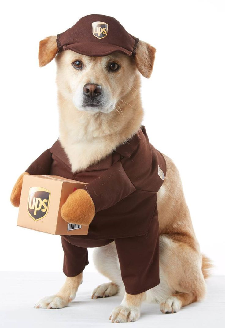 UPS Delivery Pet Costume from CostumeExpress.com