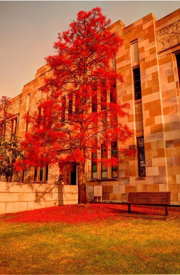 Queensland University, St Lucia in Brisbane, Queensland, Australia