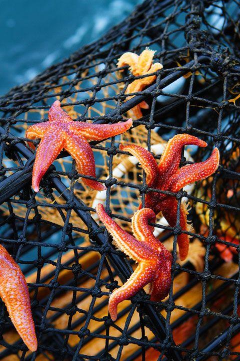 Starfish overload!