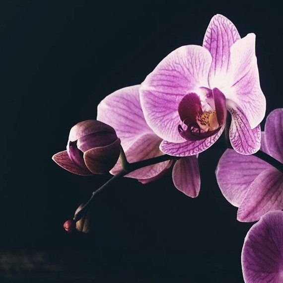 Orchid Photo Love Photography Flower Photography Custom Calligraphy Sign Plant Photo Floral Pos Orchid Photography Floral Photography Botanical Prints