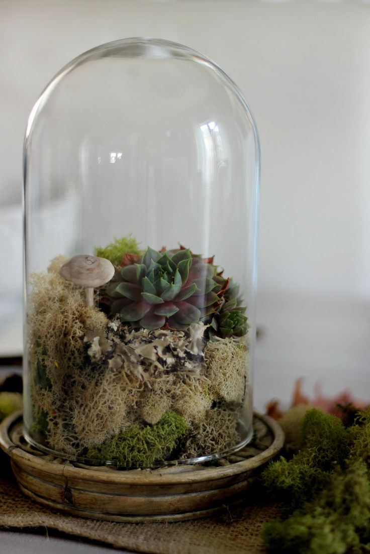 Best 25 Glass Dome Display Ideas On Pinterest