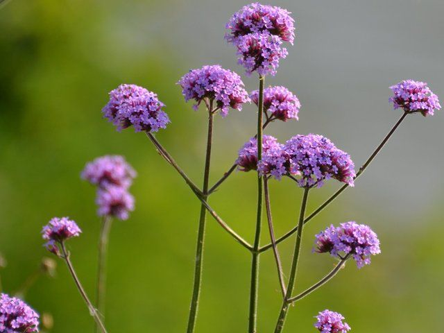 les 100 meilleures images du tableau plantes sur pinterest arbustes am nagement de jardin et. Black Bedroom Furniture Sets. Home Design Ideas