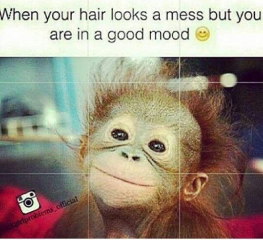4e0473ec4e6553e779ff8bcc8e020353 crazy hair hair dos 422 best memes quotes & love thangs!! images on pinterest